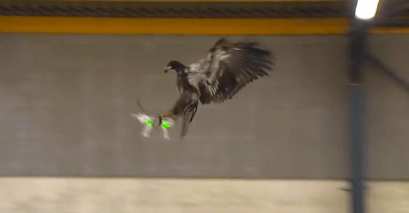 Captura de pantalla del vídeo